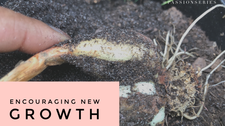 Encouraging new growth