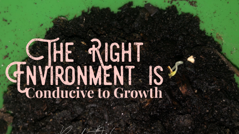 The Right Environment is Conducive to Growth
