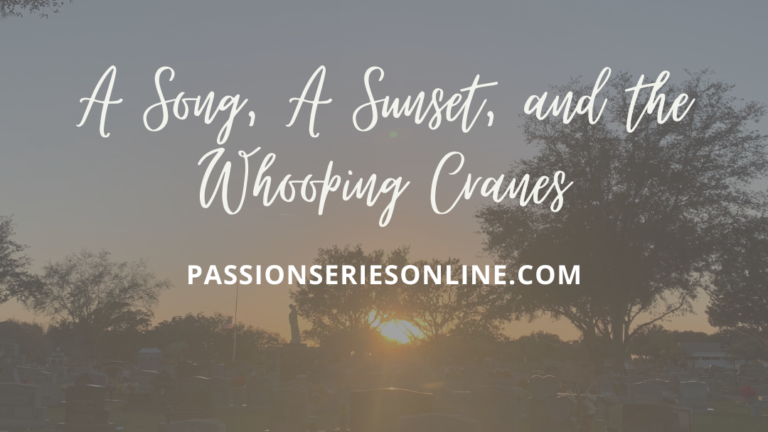 A Song, A Sunset, and the Whooping Cranes